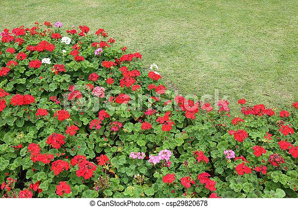 red flowers in green grass garden - csp29820678