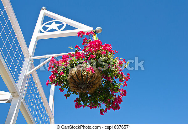 Red flowers in hanging basket - csp16376571