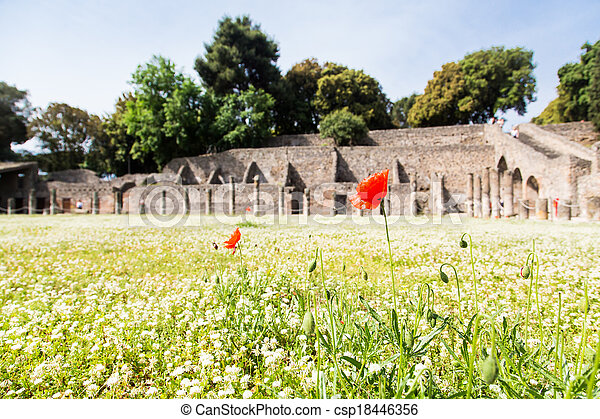 Red Flowers in Pompeii Clover - csp18446356