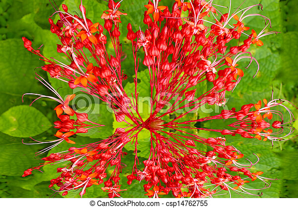 Red flowers on green background - csp14762755
