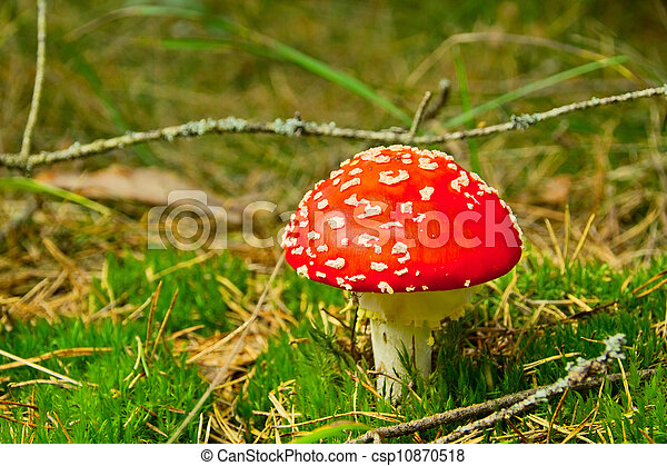 red fly agaric - csp10870518