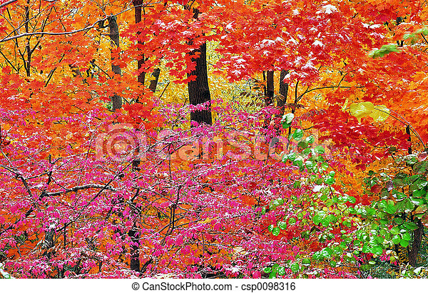 Red forest - csp0098316