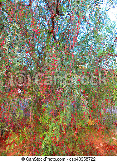 Red Fruit On False Pepper Tree Small Red Berries And Pinnate