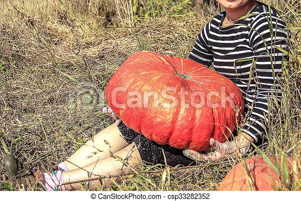 Red giant pumpkin - csp33282352