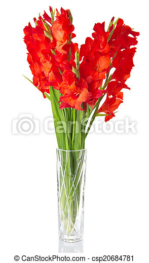 Red Gladiolus In Vase Red Gladiolus In Transparent Vase Isolated On