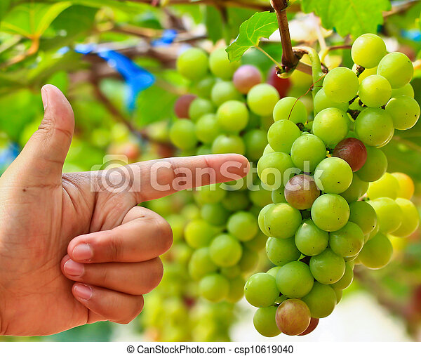 Red grapes. - csp10619040