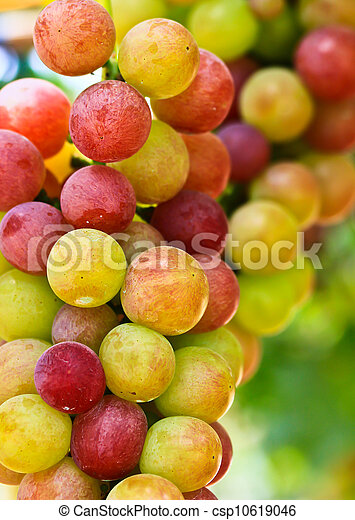 Red grapes. - csp10619046