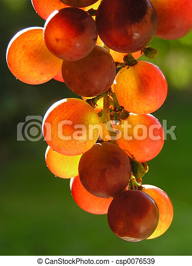 Red grapes - csp0076539