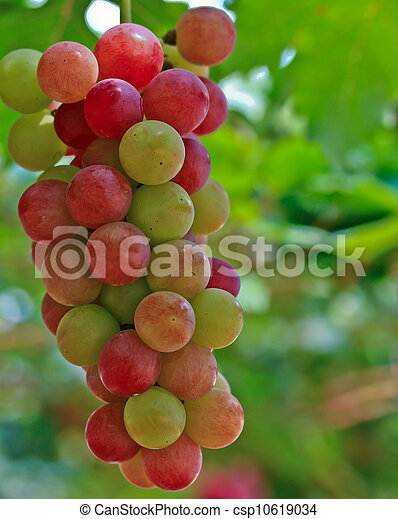 Red grapes. - csp10619034