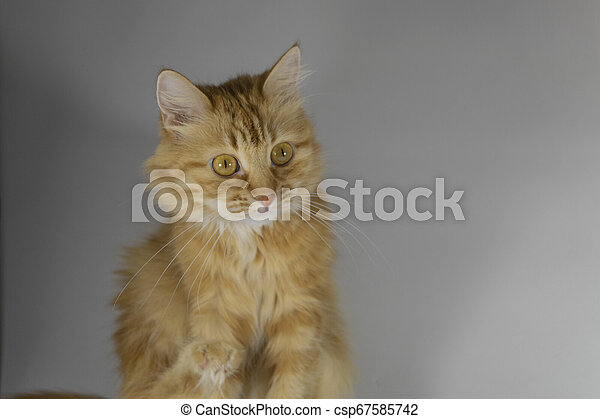 Red-haired surprised cat. - csp67585742
