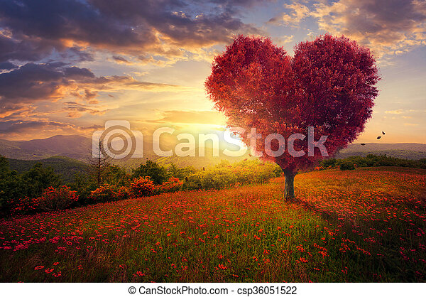 Red heart shaped tree - csp36051522