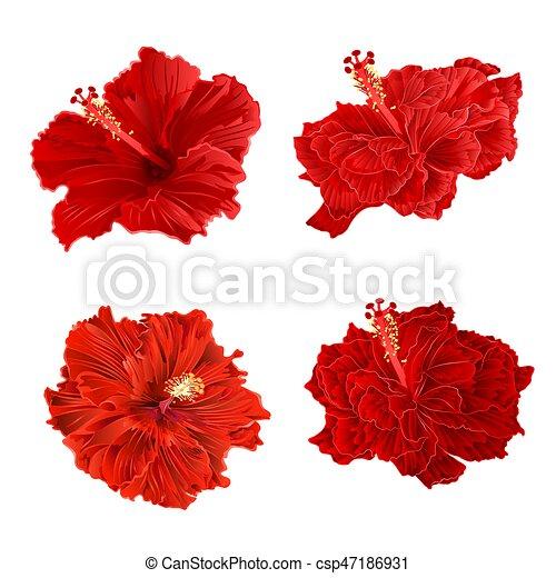 Red hibiscus corrugated tropical plant vintage hand draw set two vintage  vector.eps