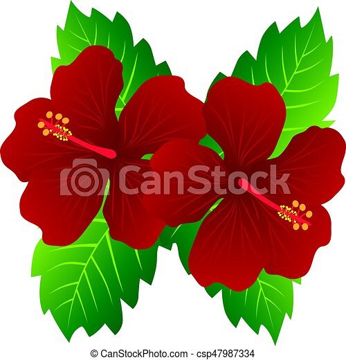 malaysia national flower red hibiscus flowers with leaves vectors rh canstockphoto com hibiscus vector flower hibiscus vector free download