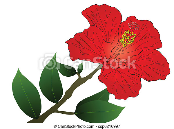 vector illustration of red hibiscus flower with leaves vectors rh canstockphoto ca hibiscus vector flower hibiscus vector files for cricut