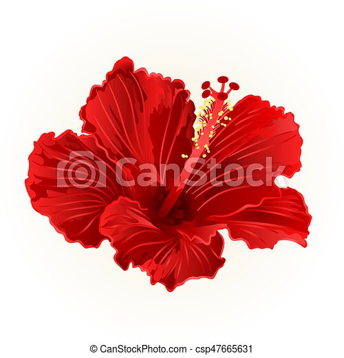 Red Hibiscus Simple Tropical Flower Vintage Hand Draw Vector Illustration Canstock