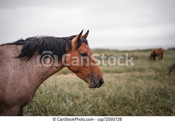 Red hoarse with black mane - csp72593728