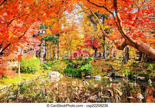 red japanese maple autumn fall , momiji tree in kyoto japan - csp22258236