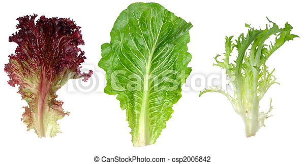 Red leaf lettuce, romaine and endive leaf - csp2005842