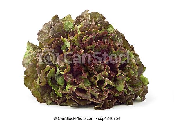 Red leaf lettuce - csp4246754