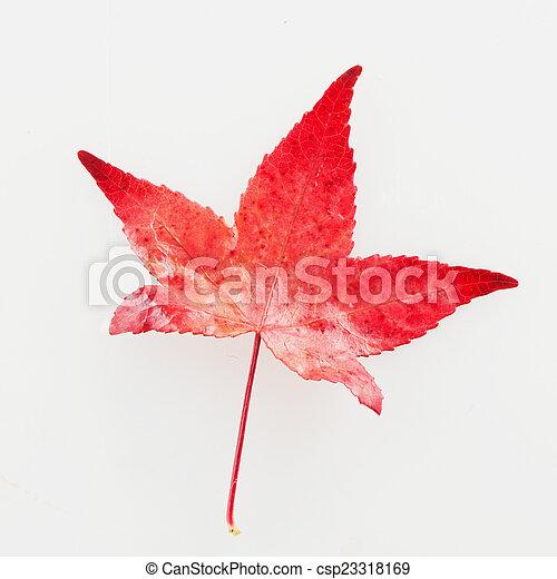 Red leaf - csp23318169