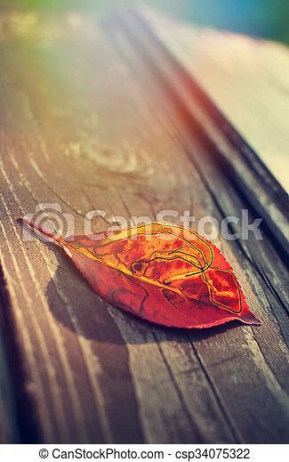 Red leaf - csp34075322