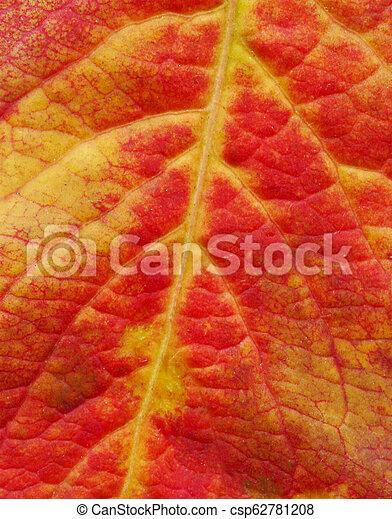 Red leaf texture. Minimal creative idea. - csp62781208