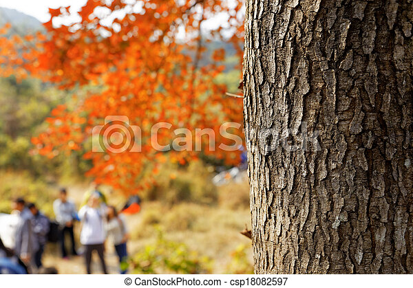 red leaves in autumn - csp18082597