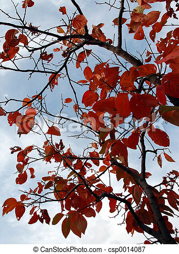 Red leaves - csp0014087
