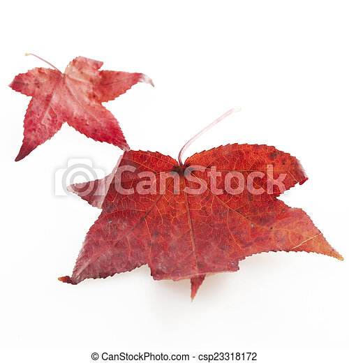 Red leaves - csp23318172