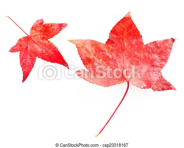 Red leaves - csp23318167