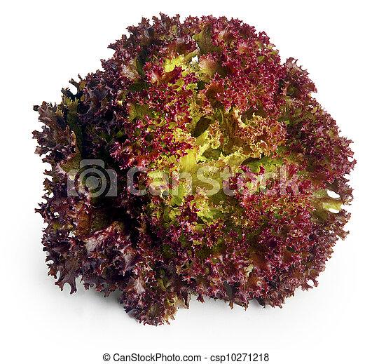 Red lettuce Leaves - csp10271218