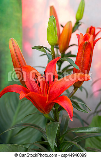 red lily flower in a garden - csp44946099