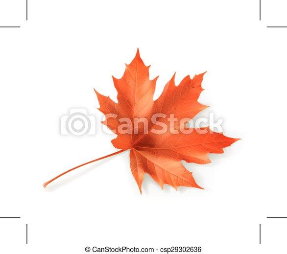 Red maple leaf  - csp29302636