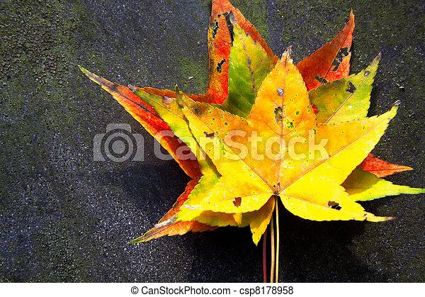Red maple leaves, golden autumn - csp8178958