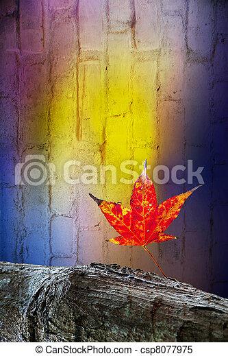 Red maple leaves, golden autumn - csp8077975