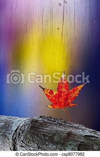 Red maple leaves, golden autumn - csp8077982
