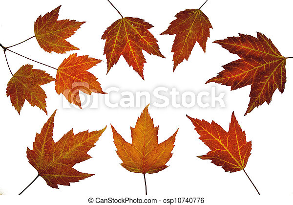Red Maple Leaves in Fall - csp10740776