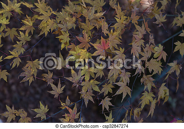 Red maple leaves - csp32847274
