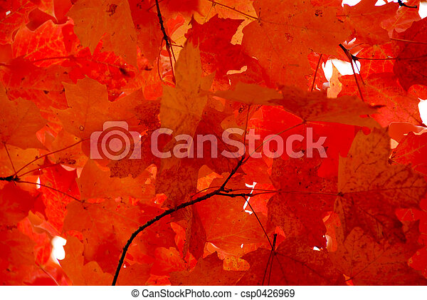 Red maple leaves - csp0426969