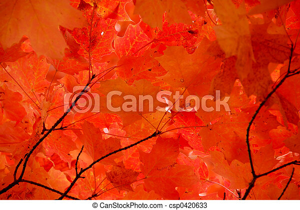 Red maple leaves - csp0420633