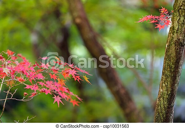 red maple tree leaves - csp10031563