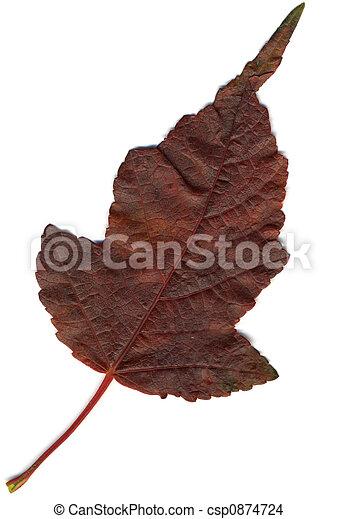 Red Oak Leaf XL - csp0874724