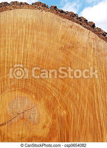 Red Oak Log End - csp0654082