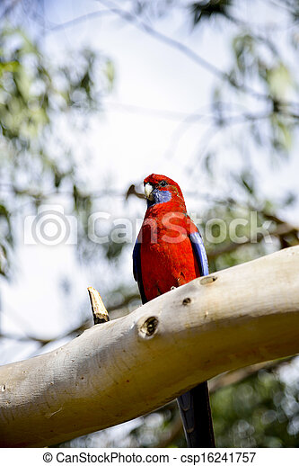 Red parot on the tree1 - csp16241757