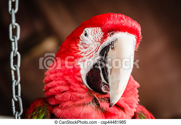 Red Parrot Macaw - csp44481985