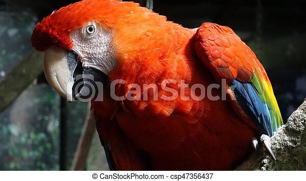 Red Parrot Wild Birds - csp47356437