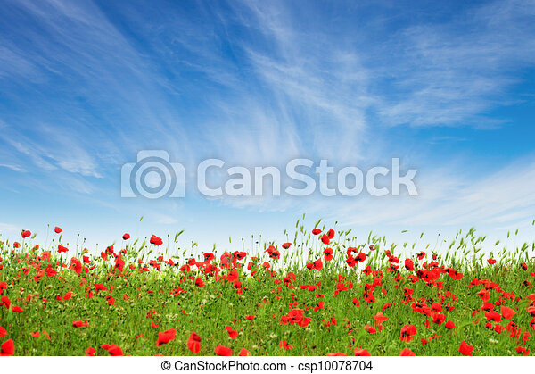Red poppies on a background of blue sky - csp10078704