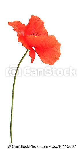 Red poppies - csp10115067