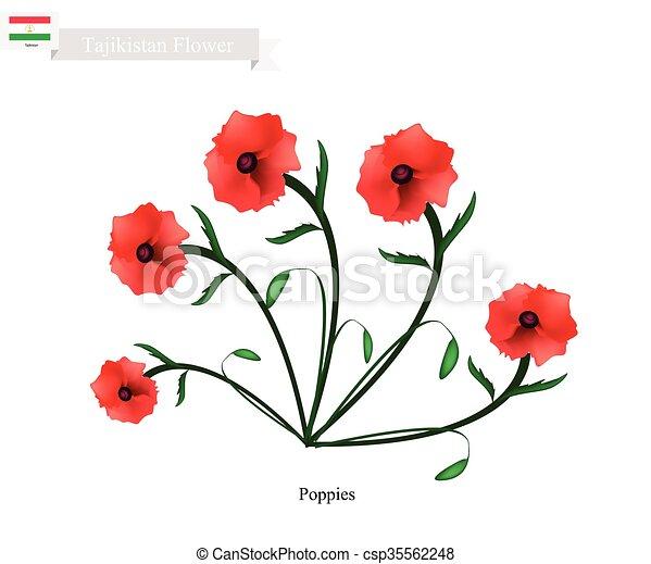 Red poppies the popular flower of tajikistan tajikistan flower red poppies the popular flower of tajikistan csp35562248 mightylinksfo