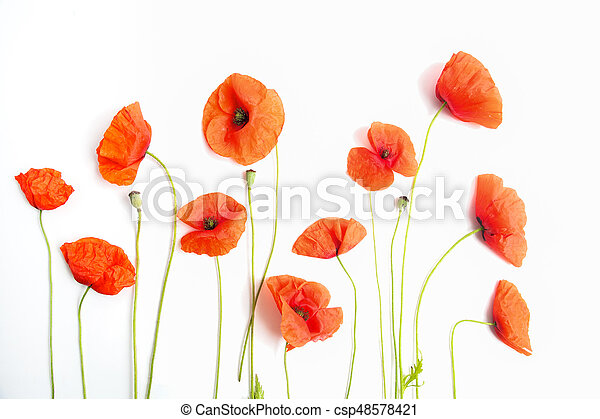 Red Poppy Flowers In A Row On White Flat Lay Top View Red Poppy